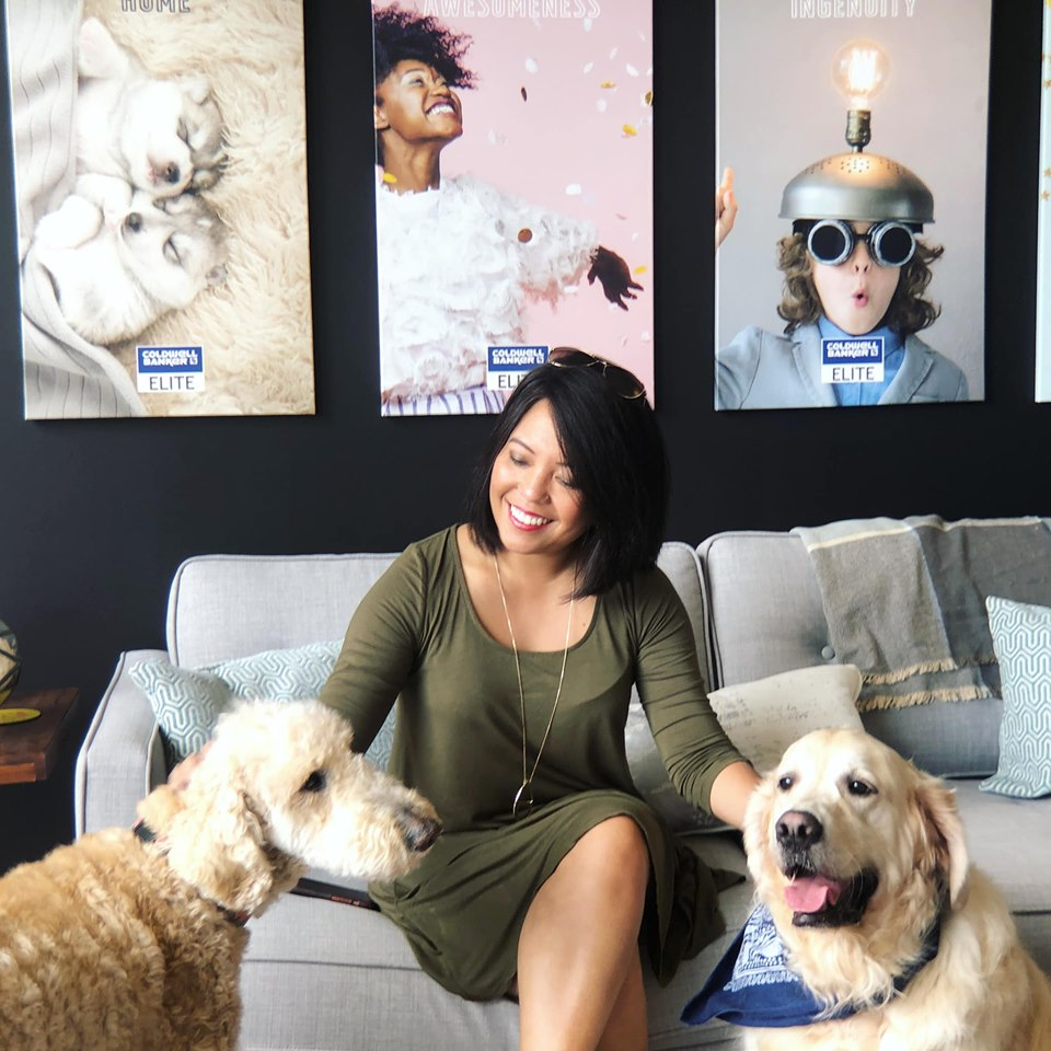 labradoodle and golden retriever in office with female real estate agent