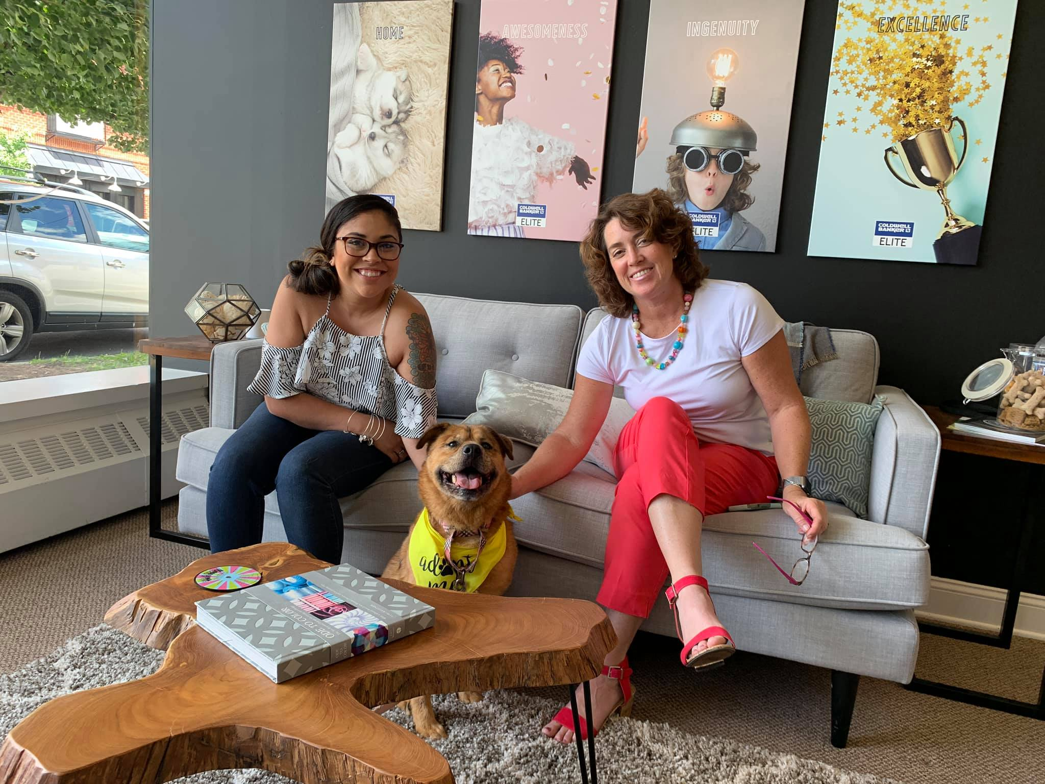 shelter dog in office couch living room female agents