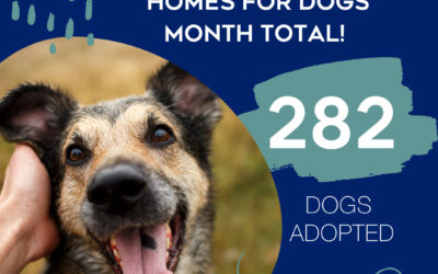 Virtual Homes for Dogs Month Breaks Adoption Records!