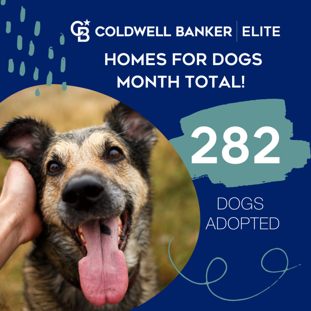 homes for dogs coldwell banker adoption